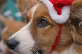 BBC One - Christmas Continuity