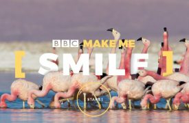 Pan BBC - Make Me