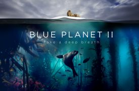 BBC One - Blue Planet II